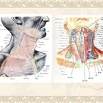 疼痛科的神经阻滞适应证、解剖点位、操作要领!